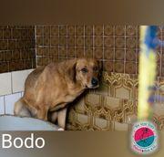 Bodo - Mit Geduld geht alles