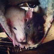 Biete zuverlässige verantwortungsvolle Tierbetreuung