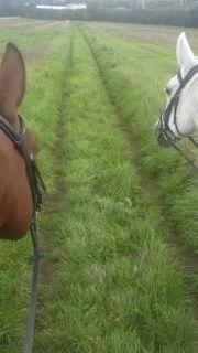 Pferdefreundin sucht Reitbeteiligung