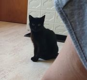 Abby ca 3jährige Katze sucht