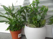 schöne Pflanzen Stückpreis 3EUR