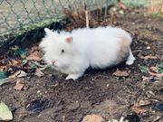 Kaninchendame mit Handikap sucht liebes