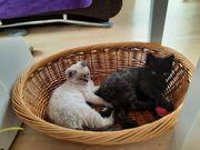 Katzenbabys dürfen ausziehen