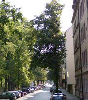 3 Zimmer Nürnberg Nordstadt