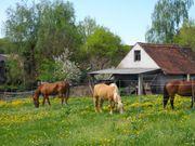 Pferdepension Reitanlage mit Grünkoppeln