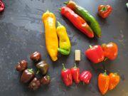 Parikapflanzen 7 verschiede Sorten - NICHT SCHARF