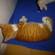9 Kätzchen kitten schmusig katzenkinder