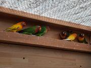 Papagei verschiedene Farben aus frei