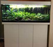Aquarium Komplett Juwel Rio 240