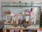 Terrarium Reptilien oder Rennmäuse