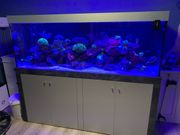 Meerwasser Aquarium 200x70x70 mit Untergestell