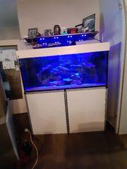 Meerwasser Aquarium Wulstverklebt von der