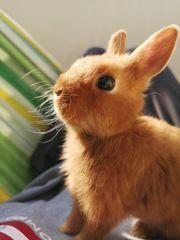 Liebevolles Kaninchen nur in gute