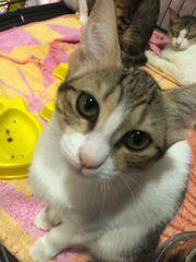 Katzen Familie sucht Zuhause zu