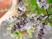 Suche Gartenstück Schrebergarten in um