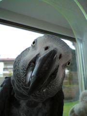 Papageienvoliere gesucht