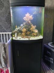 Sera cube Aquarium