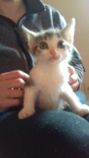 Super verkuschelte katzenbabys