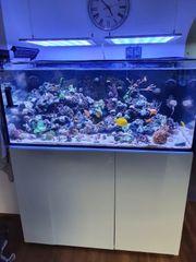 verkaufe mein Aquarium Meerwasser