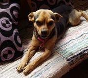Laila - kleine Hündin Mischling - Tierschutzhund