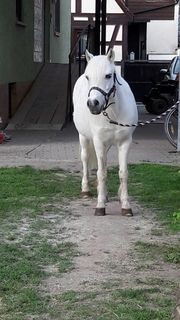 pferd verschenken gesucht