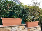 2 Pflanzen Kübel inklusive Pflanzen