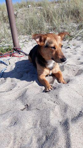 Bild 4 - Terrier und Pinscher Mix suchen - Berlin Spandau
