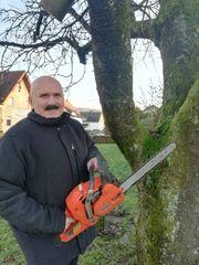 Sommer 2021 Baumfällungen - Baumrückschnitt jede