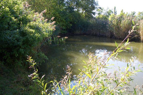 Freizeitgrundstück mit Weiher Teich