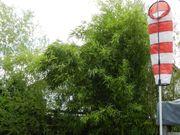 Bambus - Pflanzen Stengel