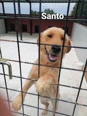 Der hübsche Santo sucht dringend