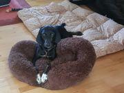 Drolliger braver freundlicher Familienhund Pluto