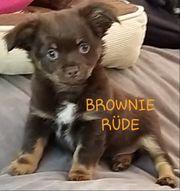 Schockoprinz Brownie