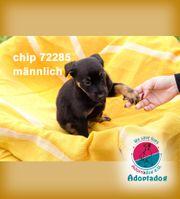 Chip 72285 - ich reiche dir