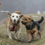Barunka Mona suchen gemeinsam ihr