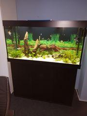 Aquarium mit Innenfilter