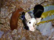 SUCHE Tierzubehör - Nager Katzen Hund