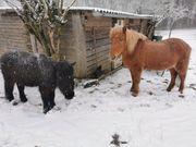 Platz für älteres Pony frei