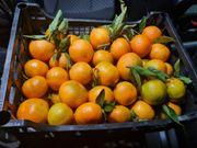 Clementine aus Kalabrien Italien