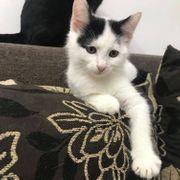Kätzchen Caja wartet auf Dich