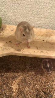 Süsse Mäuse