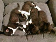 Kätzchen suchen ein Zuhause