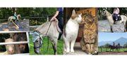 Ferienprogramm Reiterferien Pony Nachmittag Hoftag