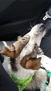 Tierschutz Nico sucht seine Familie