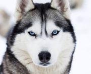 Hundeausführen oder Betreuung in Eutin