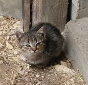 Katzenbabys abzugeben