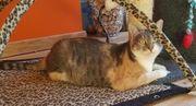 junges Katzen Fräulein Amira sucht