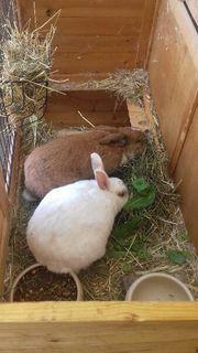 Zwei Kaninchen mit Stall