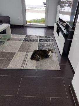 Bild 4 - Katze vermisst in Götzis - Götzis
