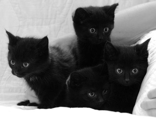 Wir suchen zwei Katzenbabys Kitten